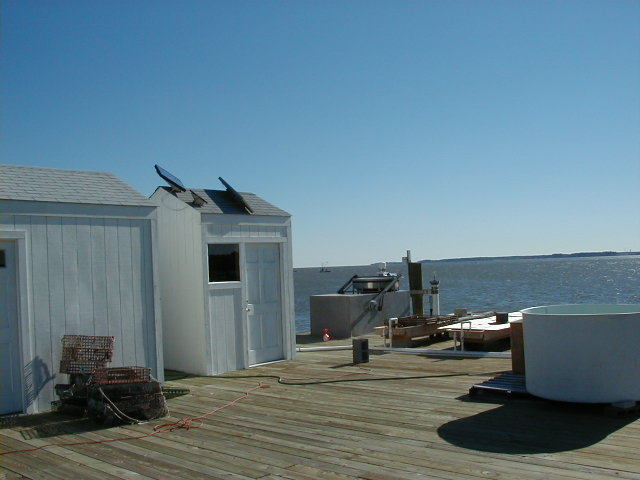 Photo of station #8637624, Gloucester Point, VA